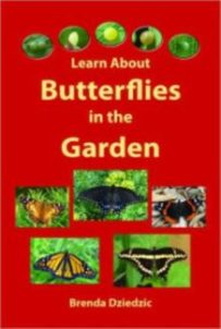 Learn_about_butterflies_in_the_garden
